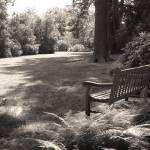 """Shady Bench"" by GordonBeck"