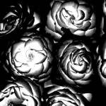"""""""Light Roses"""" by ginton"""