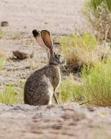 City of Rocks _ Jackrabbit