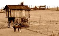 Horse with Barn Sepia 2650s