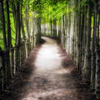 Path To My Destination Art Prints & Posters by George Oze