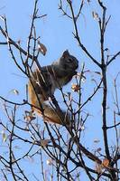 Squirrel up a Tree 2014 - Allen Graih Image