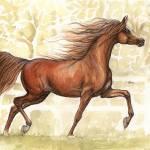"""chestnut arabian horse"" by tarantella"