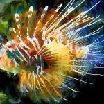 """""""lion fish"""" by ArtbySachse"""