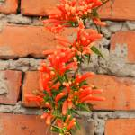 """Orange Flowers and Adobe Bricks"" by rhamm"