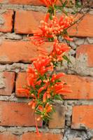 Orange Flowers and Adobe Bricks