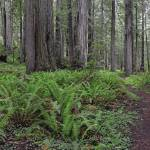 """Brown Creek Trail - low forest panorama"" by JohnChaoPhoto"