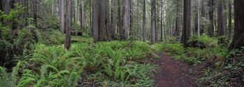 Brown Creek Trail - low forest panorama