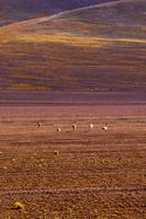 Bolivian_Alpacas_Triptych_Center_Frame