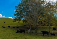 TN Cow Pasture-IMG_5238-Pano2015