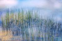 Whisper of the Reeds