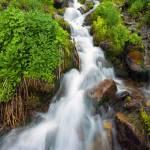 """""""Spring Falls"""" by Dawsonimages"""