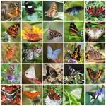 """Beautiful Butterflies Collage"" by Groecar"