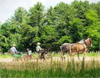 amish men sowing crop