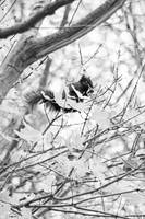 Black Squirrel in Tree Black and White