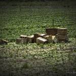 """Crates"" by LouiseReeves"