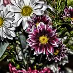 """Red Flowers white daisy Grunge"" by memoriesoflove"