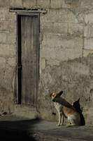 Stray Dog Next to a Door