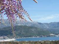 DSCF4950 Wisteria, mountain, sea