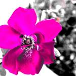 """""""ORL-3862-5 Colored flower I"""" by Aneri"""