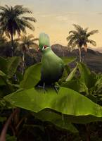 Green Turaco on Banana Tree