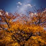 """""""Autumn leaves"""" by lightbehaviour"""