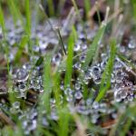 """Dew Drops in Grass #3"" by KsWorldArt"