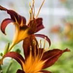 """Floral 27"" by robertllynch"