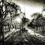 """""""Old Orchard"""" by Aesthete"""