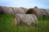 Hay Bales Among The Wildflowers
