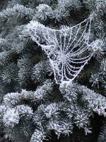 Frosted Spider Web