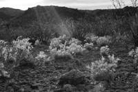 Big Bend Ranch State Park B&W
