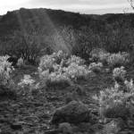"""Big Bend Ranch State Park B&W"" by allavita"