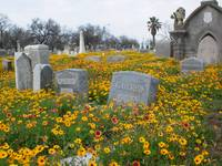 Cemetery in Bloom #4