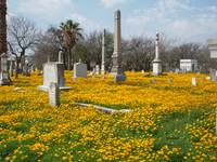Cemetery in Bloom #1