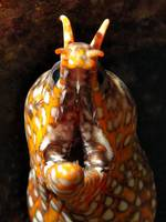 Dragon Moray's Mouth
