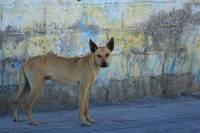 Stray Dog Next to a Wall