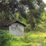 """Shed in Eucalyptus Trees"" by rhamm"