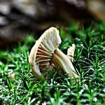 """""""Mushroom"""" by Donatus"""