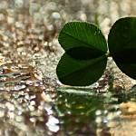 """""""Four-leaf clover"""" by Donatus"""
