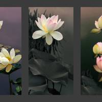 Lotus Collection Art Prints & Posters by Jessica Jenney