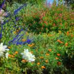 """Floral Flow"" by GlennMcCarthyArtPhoto"