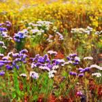 """Flower Fields"" by GlennMcCarthyArtPhoto"