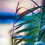 """""""Sunset in the Grass"""" by thewaltonsare"""