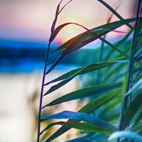 Sunset in the Grass Art Prints & Posters by Cara Walton