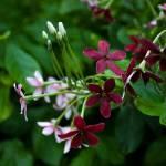 """""""Singapore Botanic Garden 01"""" by Mun_Sing"""