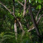 """""""Singapore Botanic Garden 18"""" by Mun_Sing"""