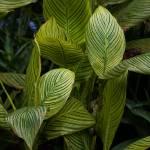 """""""Singapore Botanic Garden 17"""" by Mun_Sing"""
