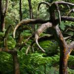 """""""Singapore Botanic Garden 08"""" by Mun_Sing"""