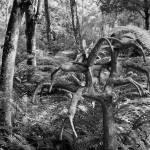 """""""Singapore Botanic Garden 06"""" by Mun_Sing"""